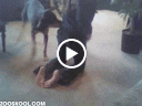 clip sex động vật, sex người vs chó
