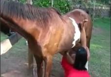 Phim sex người và ngựa địt nhau