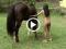 Tập bú cu với cặc ngựa