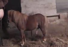Clip sex cặc ngựa địt vào lồn người đẹp